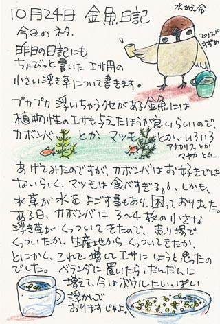10月24日金魚日記.jpg