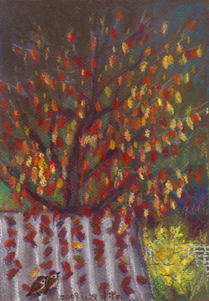 家の裏の桜の木.jpg