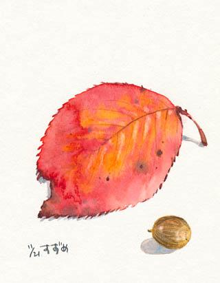 桜の葉とどんぐり.jpg