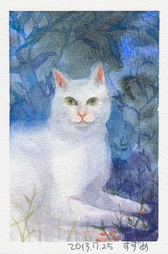 shiro-cat.jpg