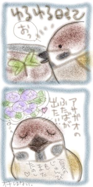アサガオ双葉090526.jpg