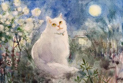 白い猫.jpg